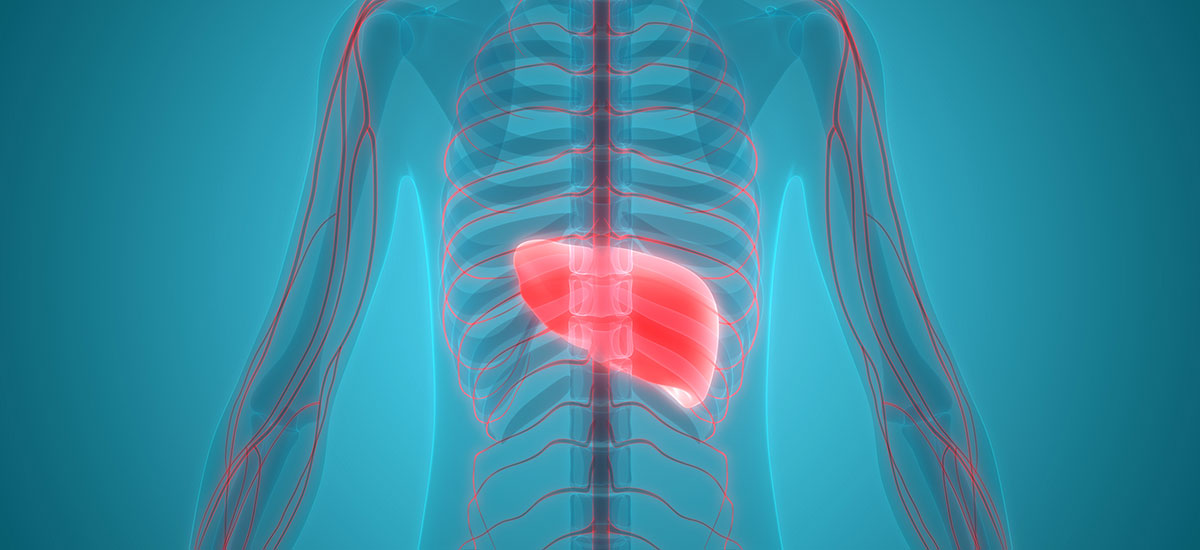 BRAND'S® Article -  Learn to Love Your Liver