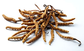 BRAND'S® ingredients cordyceps