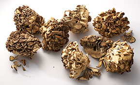 BRAND'S® ingredients maitake