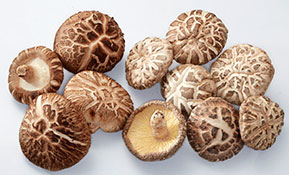 BRAND'S® ingredients shiitake
